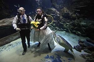 Couple Declare=