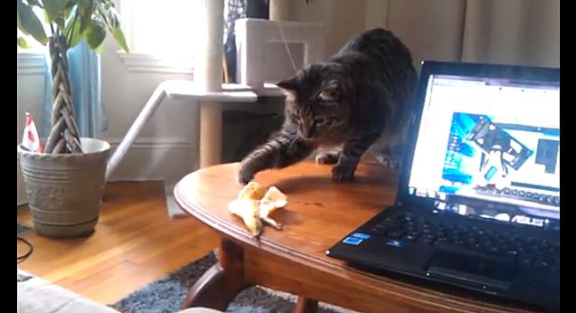 Cat Vs. Banana Peel