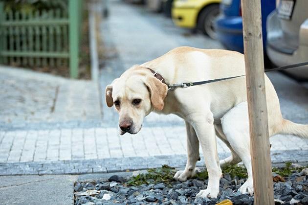 dog taking a poop