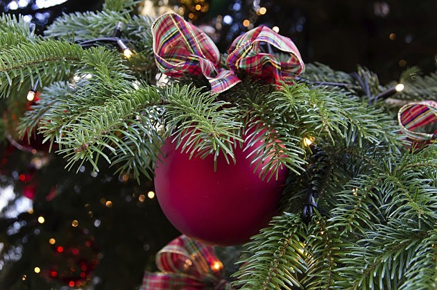 Christmas ball hanging on a fir branch